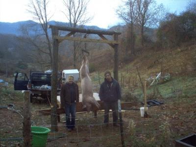 pig hanging meat farm