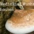 Top 4 Medicinal Mushroom Powerhouses