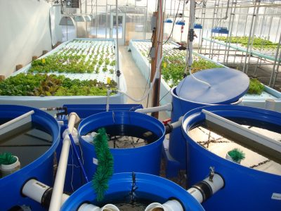 aquaponics containers water gardening