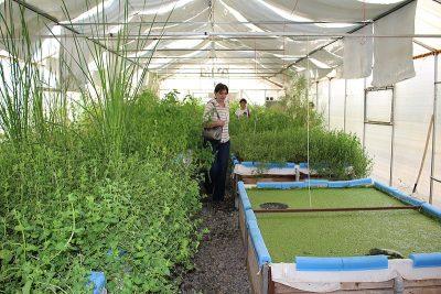 aquaponics green age gardening