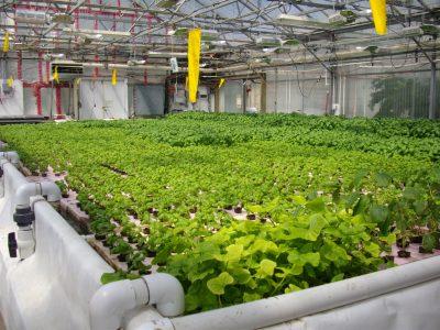 cdc south aquaponics plant soil