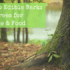 Guide to Edible Bark: Using Trees for Medicine & Food