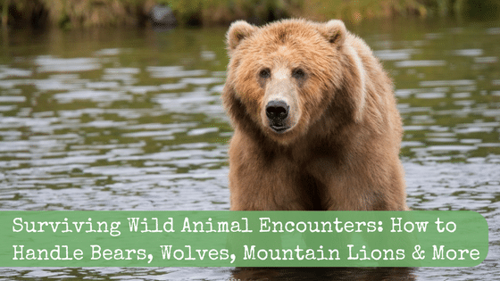 Surviving Wild Animal Encounters: How to Handle Bears, Wolves, Mountain Lions & More