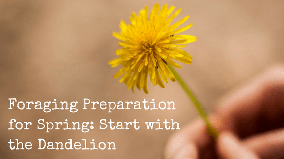 Spring Foraging: DIY Guide to Using Dandelions for Everyday Purposes