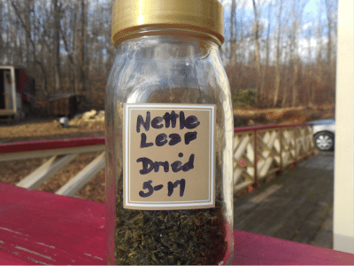 dried-stinging-nettle
