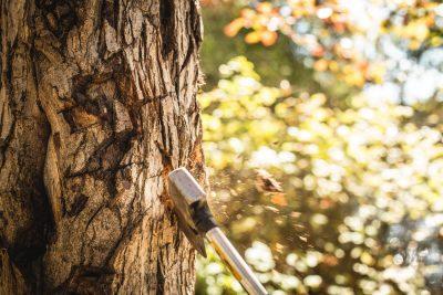hatchet-axe-chopping