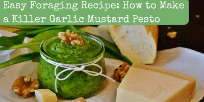 Garlic Mustard Pesto: The Perfect Recipe For Foragers