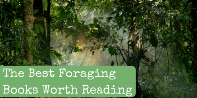 The Best Foraging Books Worth Reading