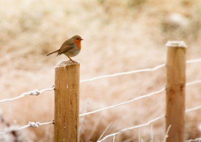 fence-bird-wire