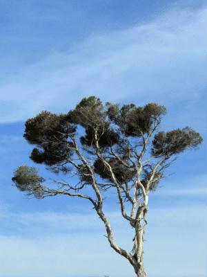 tree-sky