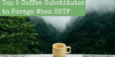 Top 5 Coffee Substitutes to Forage When SHTF