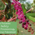 Pleasure & Poison: A Guide to Safely Foraging, Processing, and Enjoying Pokeweed
