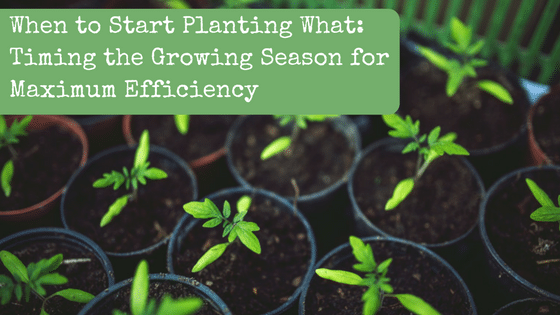 When to Start Planting What: Timing the Growing Season for Maximum Efficiency