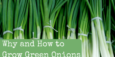 Why and How to Grow Green Onions