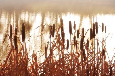 cattail river lake