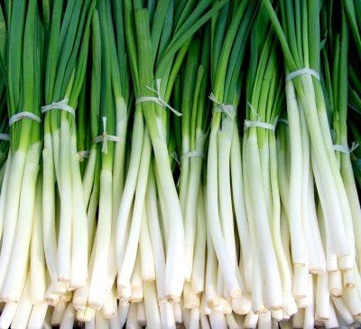 green onion spring