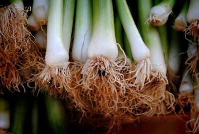 green onions roots