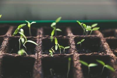 plant seedling gardening
