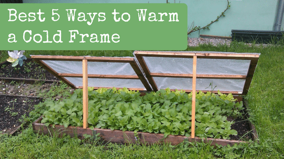 Best 5 Ways to Warm a Cold Frame