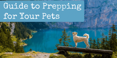 Guide to Prepping for Your Pets