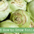 Why and How to Grow Kohlrabi