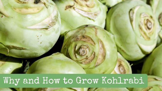 Why and How to Grow Kohlrabi