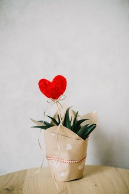 aloe vera plant heart
