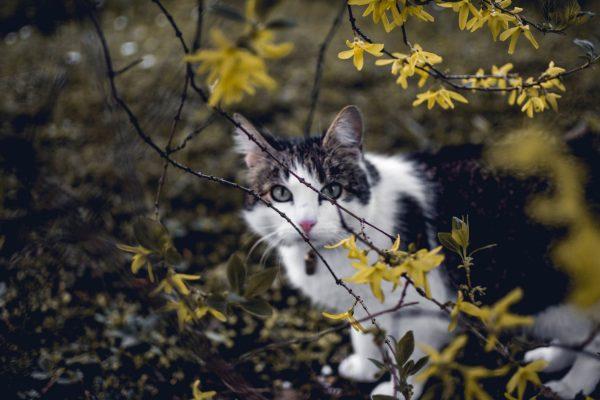 cat in the wild cute