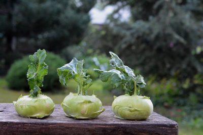 kohlrabi chinese cabbage