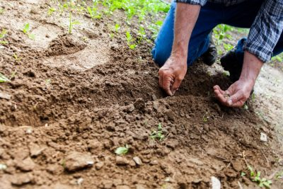 man planting seeds into ground