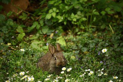 rabbit in jungle forest
