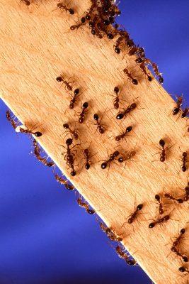 ants on a stick