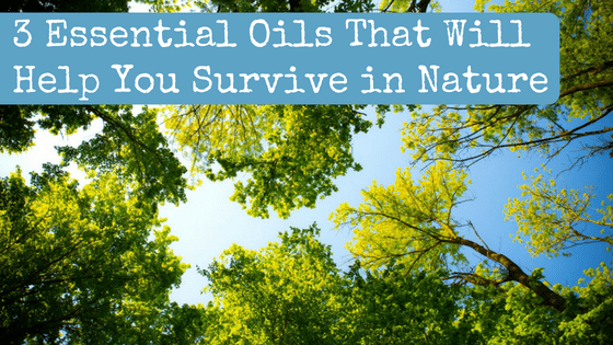 3 Essential Oils That Will Help You Survive in Nature