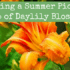 Foraging a Summer Pick-Me-Up of Daylily Blossoms