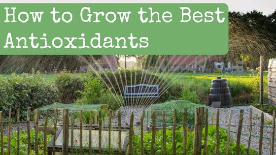 How to Grow the Best Antioxidants