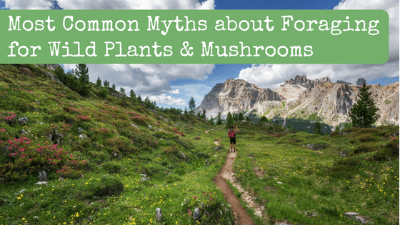 Most Common Myths about Foraging for Wild Plants & Mushrooms