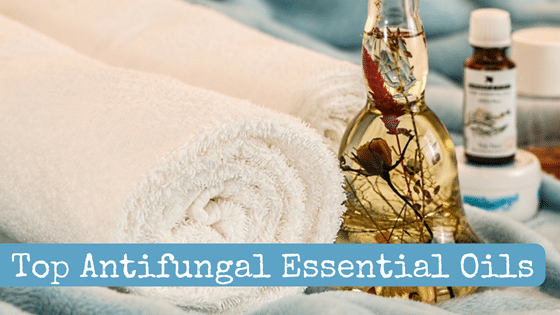 Top Antifungal Essential Oils