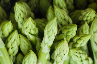 asparagus plant green