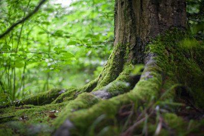 tree greenery grass
