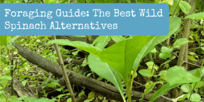 Foraging Guide: The Best Wild Spinach Alternatives