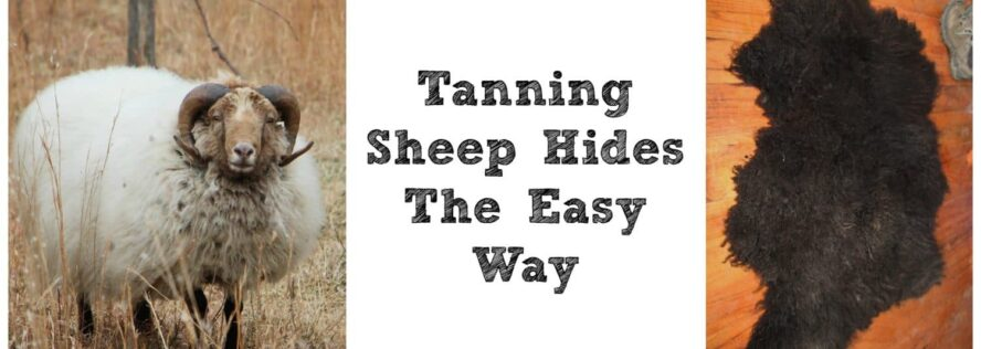 Tanning Sheep Hides The Easy Way