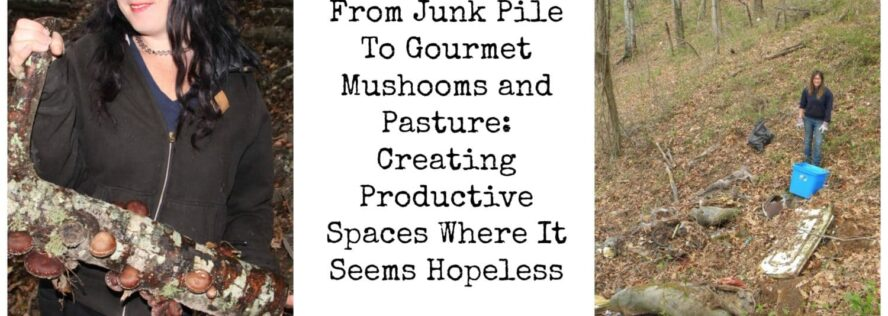 From Junk Pile To Gourmet Mushooms and Pasture: Creating Productive Spaces Where It Seems Hopeless