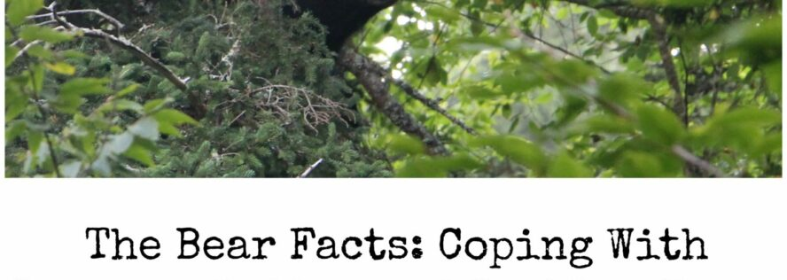 The Bear Facts: Coping With Overpopulation and Problem Bears In Town and Forest