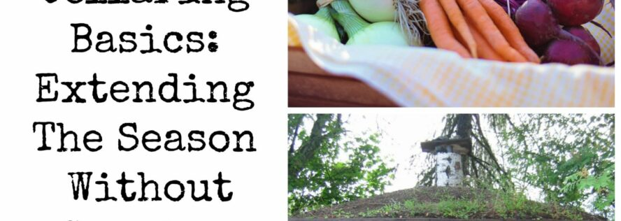 Root Cellaring Basics: Extending the Season Without Canning