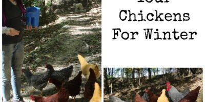 Preparing Your Chickens For Winter