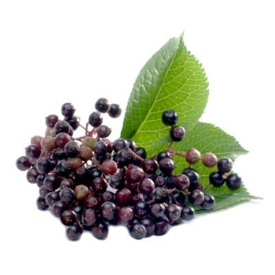 benefits and uses of elderberry