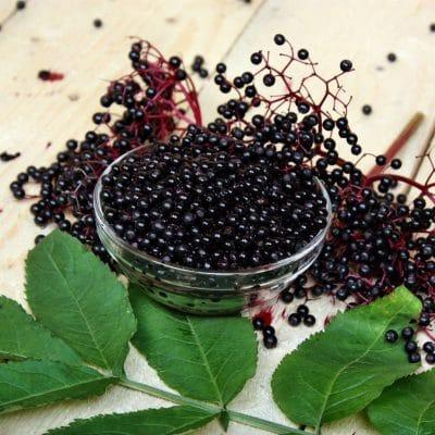 elderberries herbal tea