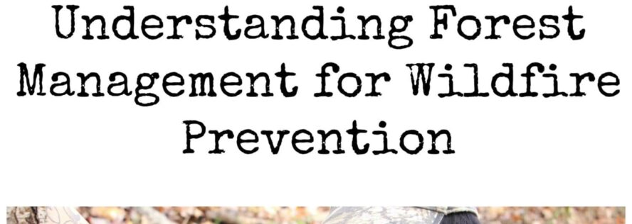 Understanding Forest Management for Wildfire Prevention