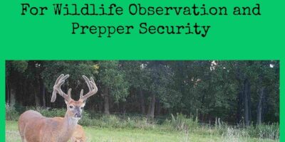 Exploring Game and Trail Cameras For Wildlife Observation and Prepper Security