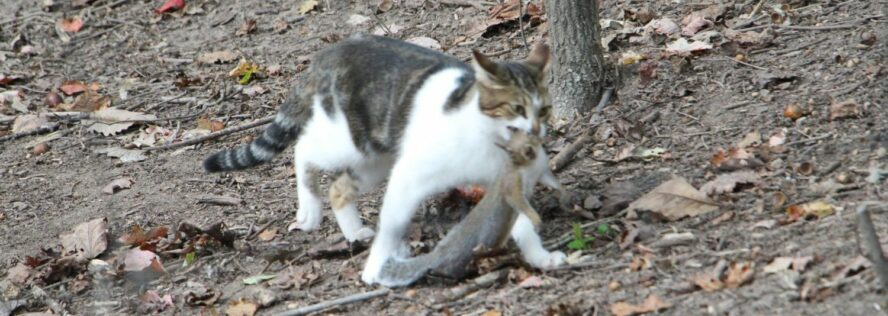 The Importance Of Cats For Prepping and SHTF: Here come the survival kitties!
